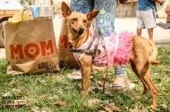 Moradores de rua e seus Cães – Primeiro Free Store MRSC – Praça PrincesaIsabel