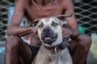Moradores de rua e seus Cães – Em Natal, amigos se juntam, se cuidam e buscam maissegurança!