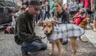 Moradores de rua e seus Cães – Ação Praça Patriarca Abril de2017