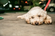 Moradores de rua e seus Cães – Betão eCarneiro