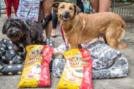 Moradores de rua e seus Cães – Décima Nona edição da Ação MRSC – Santa CeciliaSP